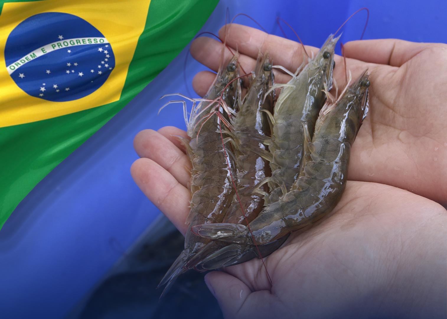 CAMARÓN ECUATORIANO INGRESARÁ NUEVAMENTE A BRASIL
